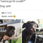 Wanna Go For A Walk? - Dog - Yeth