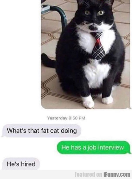 What's That Fat Cat Doing - He Has A Job Interview