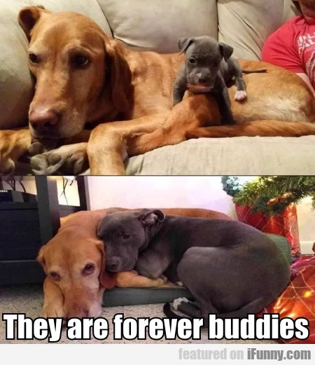 They Are Forever Buddies
