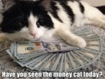 Have You Seen The Money Cat Today?