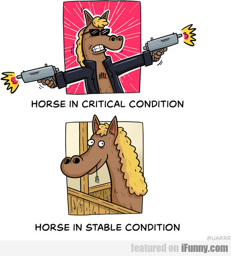 horse in critical condition