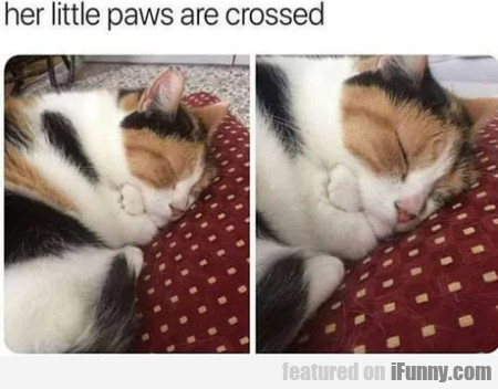 Her little paws are crossed