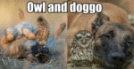 Owl And Doggo