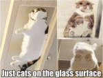 Just Cats On The Glass Surface