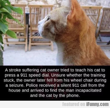 A stroke suffering cat owner tried to teach his...