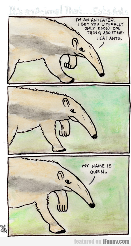 It's An Anteater. I Bet You Literally Only...