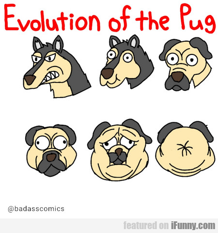 Evolution Of The Pug