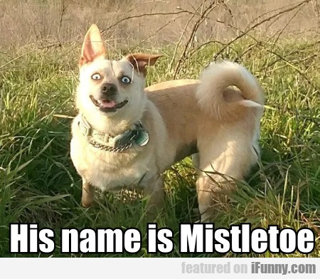 His Name Is Mistletoe
