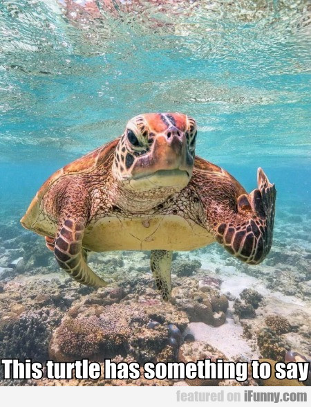 This Turtle Has Something To Say
