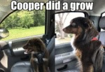 Cooper Did A Grow