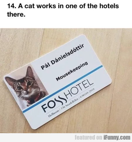 A Cat Works In One Of The Hotels There