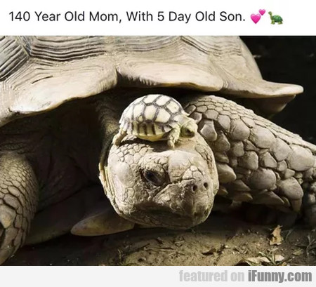 140 year old mom, with 5 day old son