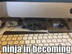 Ninja In Becoming