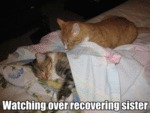 Watching Over Recovering Sister
