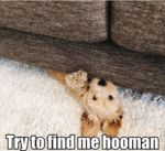 Try To Find Me Hooman