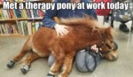 Met A Therapy Pony At Work Today...