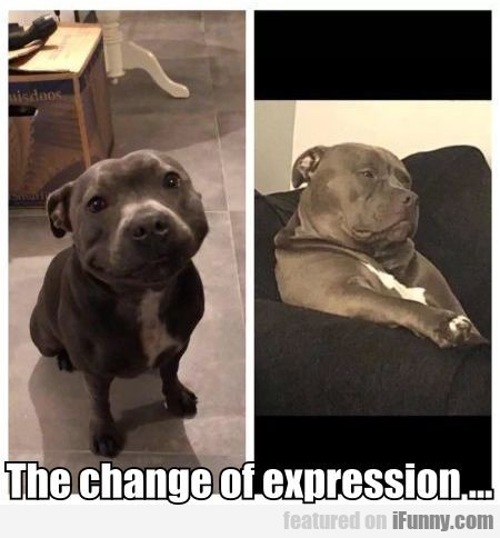 The change of expression...