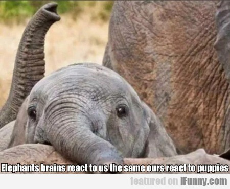 Elephants Brains React To Us The Same Ours React..