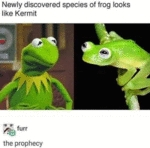 Newly Discovered Species Of Frog Looks Like Kermit