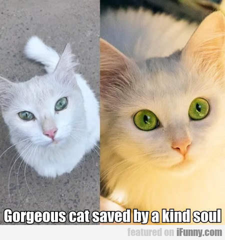 Gorgeous cat saved by a kind soul