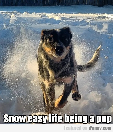 Snow Easy Life Being A Pup