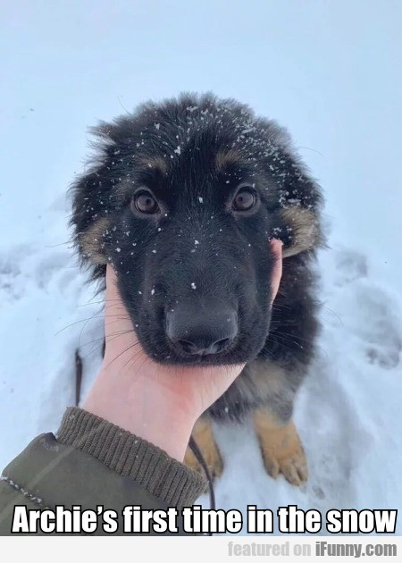 Archie's first time in the snow