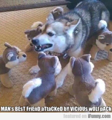 Man's Best Friend Attacked By Vicious Wolf Pack