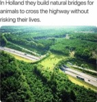 In Holland They Build Natural Bridges For Animals