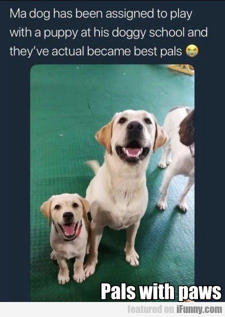 Pals with paws