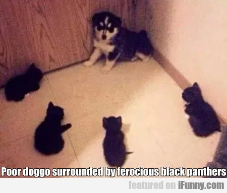 Poor Doggo Surrounded By Ferocious Black Panthers