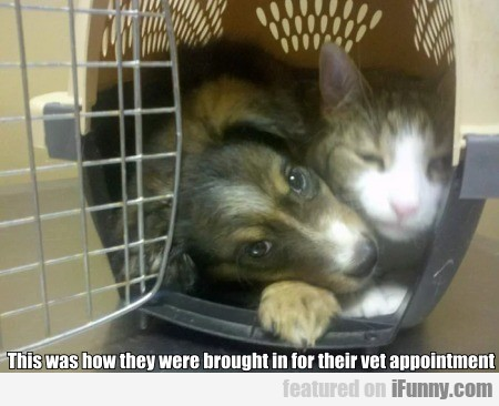 This was how they were brought in for their vet...