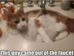 This Guy Came Out Of The Faucet...