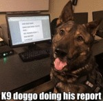 K9 Doggo Doing His Report