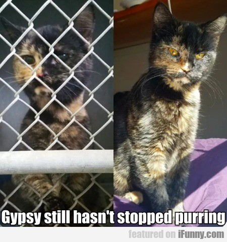 Gypsy still hasn't stopped purring...