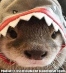 Poor Otter Just Devoured By Bloodthirsty Shark