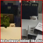 He Is Always 'hiding' Like This
