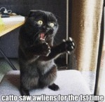 Catto Saw Awliens For The 1st Time