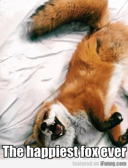 The Happiest Fox Ever