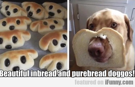 Beautiful Inbread And Purebread Doggos!