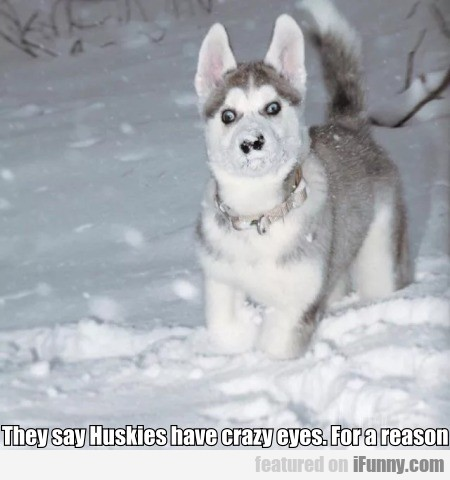 They Say Huskies Have Crazy Eyes. For A Reason
