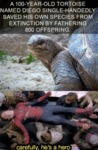 A 100-year-old Tortoise Named Diego Single...