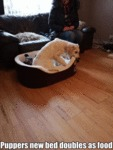 Puppers New Bed Doubles As Food