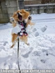 Enjoying The Snow A Little Too Much