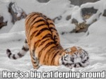 Here's A Big Cat Derping Around