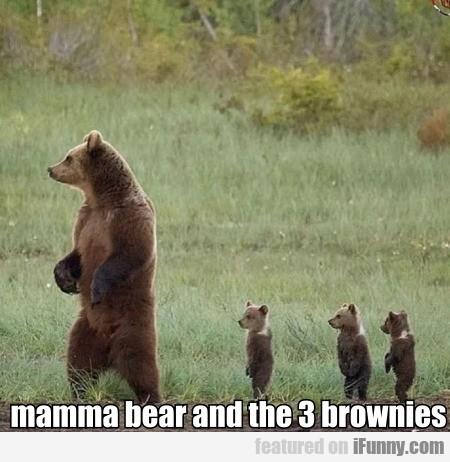 Mamma Bear And The 3 Brownies