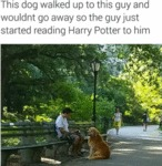 This Dog Walked Up To This Guy And..