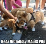 Bear Viciously Mauls Pup