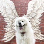 C L O U D B O Y E Earns His Wings