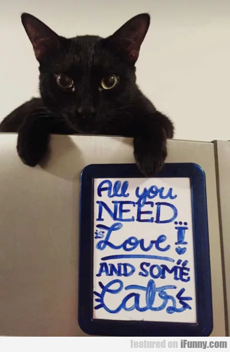 All you need is love and some cats