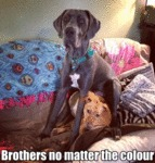 Brothers No Matter The Colour